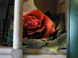 20121021-rosarossamuseoperarenaverona
