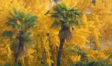 Spettacolare esplosione di colore da via Cairoli