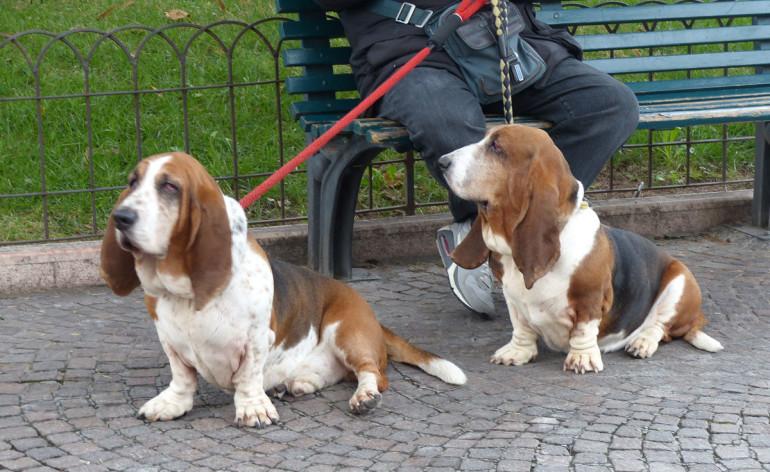 Mini banda bassotti in Piazza Bra
