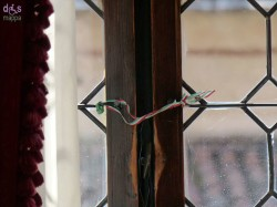 Nastro tricolore bandiera italiana finestra Palazzo scaligero Verona