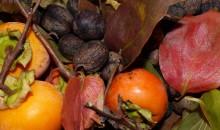 L'autunno da mangiare
