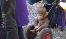 Una scimmia nel vallo dell'Arena